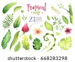 hand drawn watercolor tropical... | Shutterstock . vector #668283298