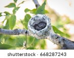Hummingbird Nest With 2 Baby...
