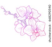 hand drawing   branch of orchid ... | Shutterstock .eps vector #668290540