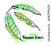 Hand Drawn Banana Leaves On...