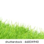 isolated green grass on a white ... | Shutterstock . vector #66834940