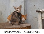 Stock photo  kittens afraid 668388238