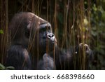gorilla sitting quietly | Shutterstock . vector #668398660