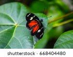 cattleheart butterfly  parides... | Shutterstock . vector #668404480