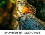 golden mantella frog | Shutterstock . vector #668404486