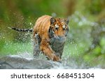 tiger with splash river water.... | Shutterstock . vector #668451304