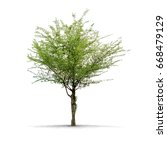 view of a high definition tree... | Shutterstock . vector #668479129