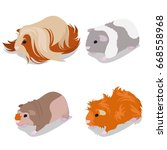 guinea pig breeds set with... | Shutterstock .eps vector #668558968