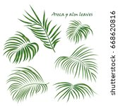 branch tropical palm areca... | Shutterstock .eps vector #668620816