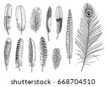 collection of feather... | Shutterstock .eps vector #668704510