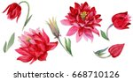 Wildflower Aquilegia Flower In...