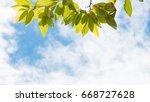 trees frame over blue sky on... | Shutterstock . vector #668727628