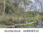 overgrown and littered with... | Shutterstock . vector #668848510