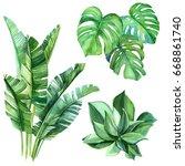succulents  monstera  palm... | Shutterstock . vector #668861740