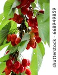 red cherries | Shutterstock . vector #668949859