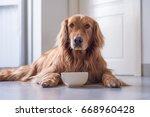 the golden retriever eating | Shutterstock . vector #668960428