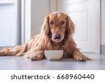 the golden retriever eating | Shutterstock . vector #668960440