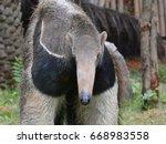 giant anteater | Shutterstock . vector #668983558