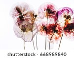 dried flowers | Shutterstock . vector #668989840