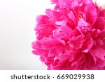 Pink Peony Flower In A...