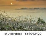 beautiful plum blossoms field...   Shutterstock . vector #669043420