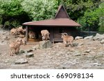 Small photo of Arui animal also known as Barbary sheep Ammotragus lervia