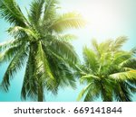 coconut palm tree in vintage... | Shutterstock . vector #669141844