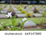 White Flower With Tombstone In...