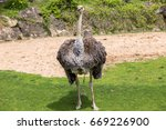 two ostriches  struthio camelus ... | Shutterstock . vector #669226900