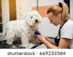 grooming west highland white... | Shutterstock . vector #669233584
