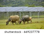 in the solar photovoltaic... | Shutterstock . vector #669237778