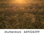 Hay Field In The Sunset  Close...