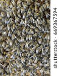 Small photo of A dense cluster of swarms of bees in the nest. Working bees, drones and uterus in a swarm of bees. Honey bee. Accumulation of insects