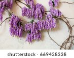 wisteria tree | Shutterstock . vector #669428338