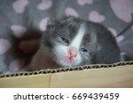 cat and kitten | Shutterstock . vector #669439459