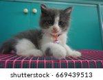 cat and kitten | Shutterstock . vector #669439513