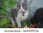 cat and kitten | Shutterstock . vector #669439516