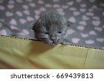cat and kitten | Shutterstock . vector #669439813
