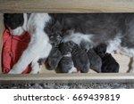 cat and kitten | Shutterstock . vector #669439819