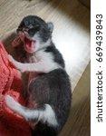 cat and kitten | Shutterstock . vector #669439843