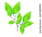 realistic green leaf  isolated... | Shutterstock .eps vector #669480094