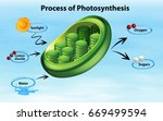 diagram showing process of... | Shutterstock .eps vector #669499594