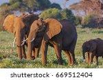 Elephants Family Close Up....