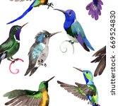 sky bird colibri  pattern in a... | Shutterstock . vector #669524830
