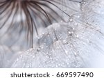 Abstract Photo Of A Dandelion...