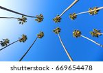 view of a cluster of very tall... | Shutterstock . vector #669654478
