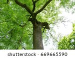 ash tree | Shutterstock . vector #669665590