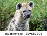 spotted hyena    laughing hyena | Shutterstock . vector #669683308