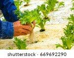 hydroponics organic fresh... | Shutterstock . vector #669692290
