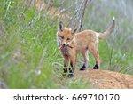 closeup of a beautiful furry... | Shutterstock . vector #669710170